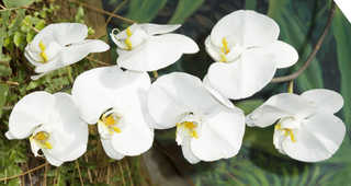 Flowers 0042