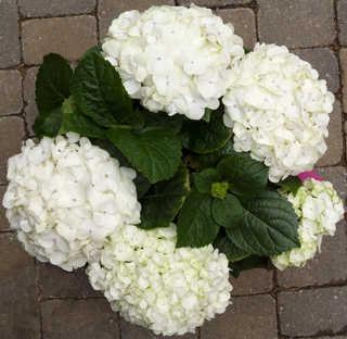Flowers 0044