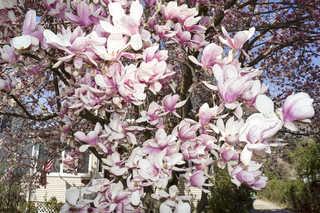 Flowers 0045