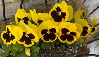 Flowers 0047