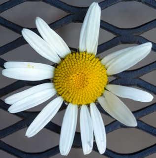 Flowers 0048