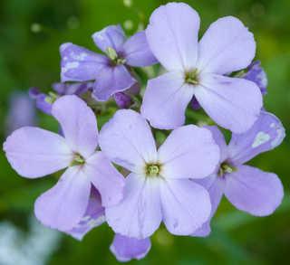 Flowers 0049