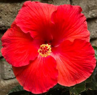 Flowers 0050