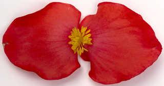 Flowers 0054