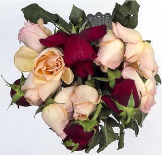 Flowers 0055