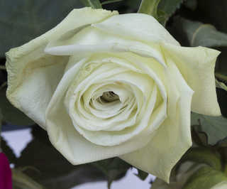 Flowers 0058