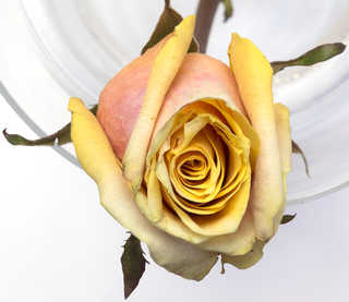 Flowers 0072