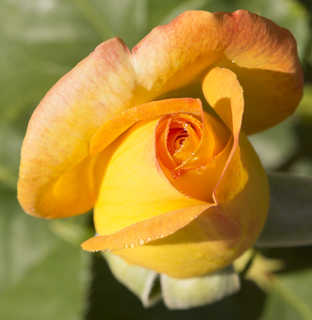 Flowers 0075