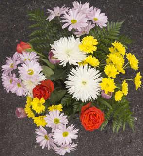 Flowers 0079
