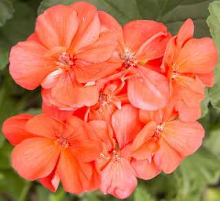 Flowers 0083