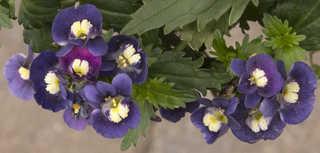Flowers 0084