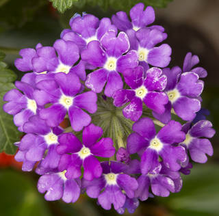 Flowers 0088