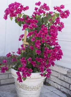 Flowers 0089