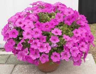 Flowers 0092
