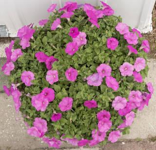 Flowers 0094