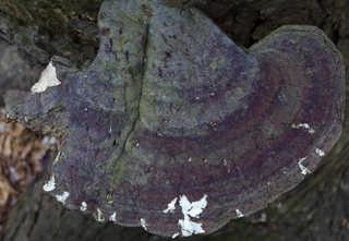 Fungus 0001