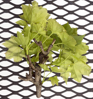 leaves-bunches_0032 texture