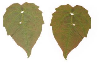 Leaves single autumn 0001