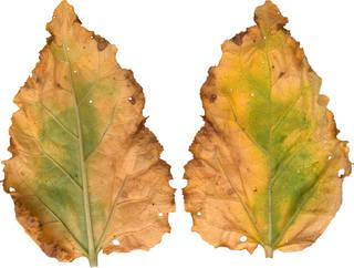Leaves single autumn 0025