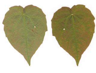 Leaves single autumn 0061