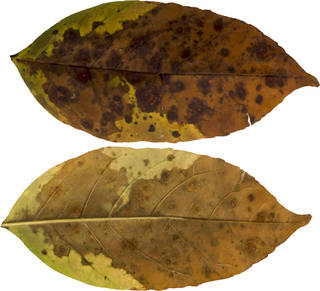 Leaves single autumn 0089