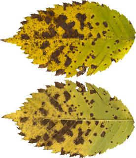 Leaves single autumn 0092