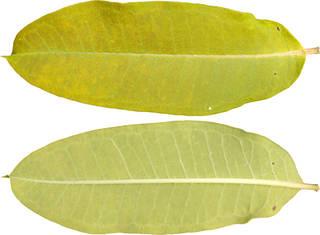Leaves single autumn 0097