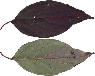 Leaves single autumn 0100