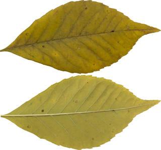 Leaves single autumn 0102
