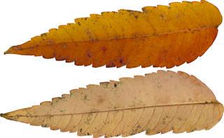 Leaves single autumn 0104