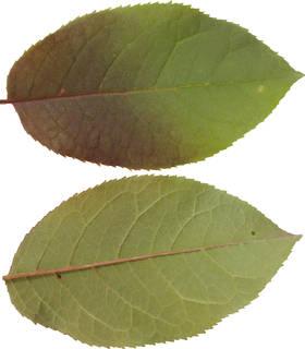 Leaves single autumn 0105