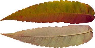 Leaves single autumn 0106