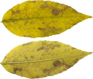 Leaves single autumn 0113