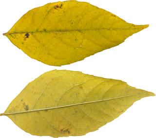 Leaves single autumn 0116