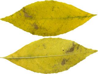 Leaves single autumn 0117