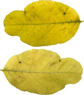 Leaves single autumn 0119