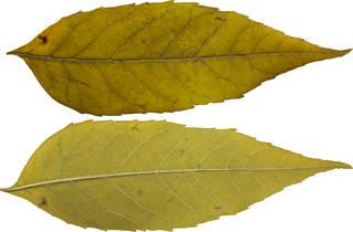 Leaves single autumn 0120
