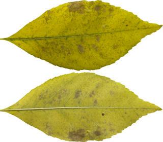 Leaves single autumn 0125