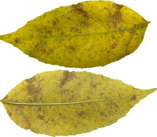 Leaves single autumn 0126