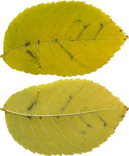 Leaves single autumn 0129