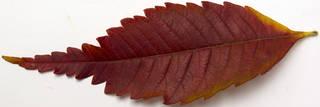Leaves single autumn 0139