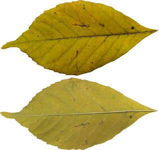 Leaves single autumn 0145