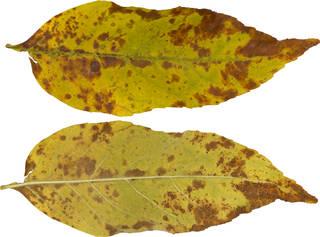 Leaves single autumn 0158