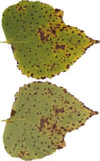 Leaves single autumn 0170