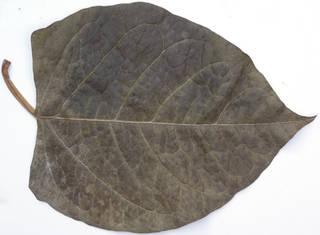 Leaves single autumn 0186
