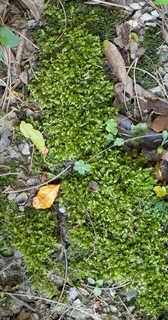 Moss 0005