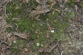 Moss 0011