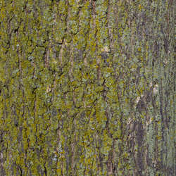 Mossy Tree Bark Category