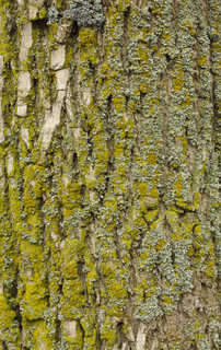 Mossy tree bark 0002