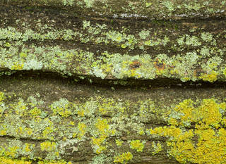 Mossy tree bark 0027